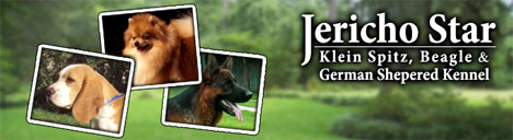 files/liebhaber/Grafiken/Zuechterbanner 468/Jericho-Star-Kennel.jpg