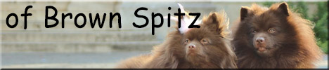 of Brown Spitz