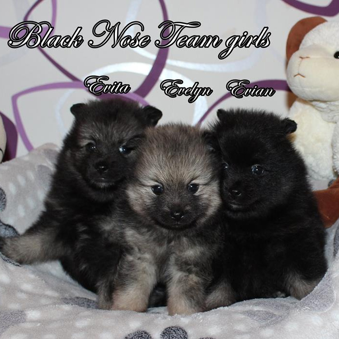"""Black Nose Team"" kennel E-Wurf"
